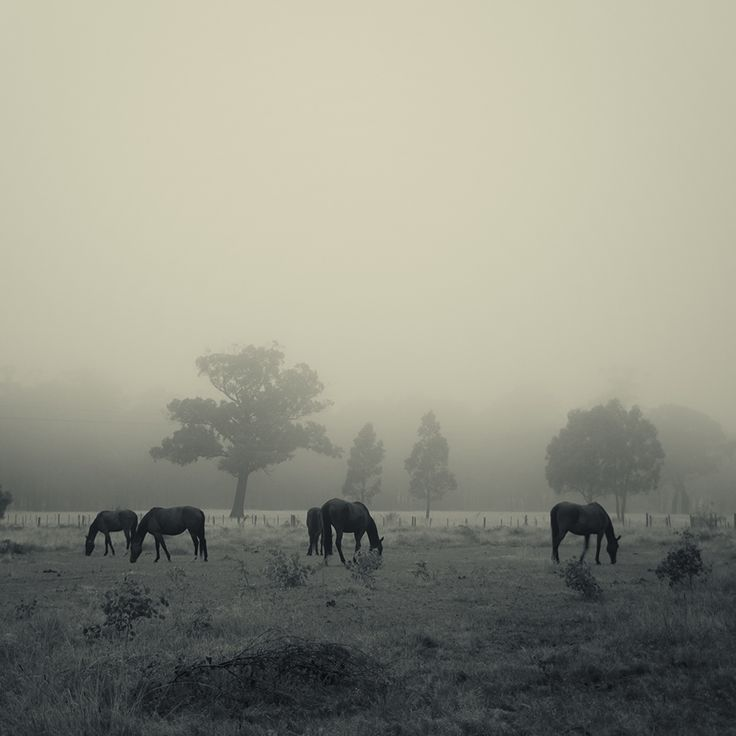 Daylesford, country Victoria. Image by Sonja Rolton