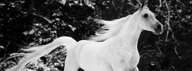 White Horse Facebook Timeline Cover