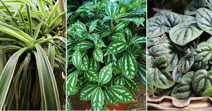 25 best ideas about plantas para sol on pinterest - Plantas de sombra para jardin ...