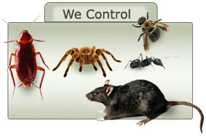 Protect from pests