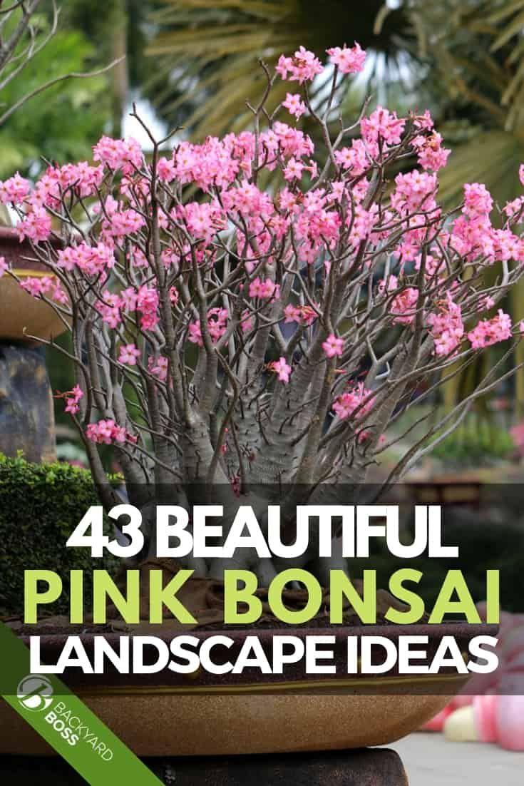43 Beautiful Pink Bonsai Landscape Ideas Bonsai Tree Care Indoor Bonsai Tree Bonsai Tree