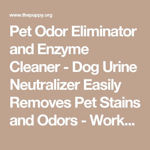 Pet Odor Eliminator and Enzyme Cleaner - Dog Urine Neutralizer Easily Removes Pet Stains and Odors - Works on Cat Urine - Great with Puppy Training Pads and Wipes - Linen Fresh Scent | The Puppy | Dog food, costumes and equipment