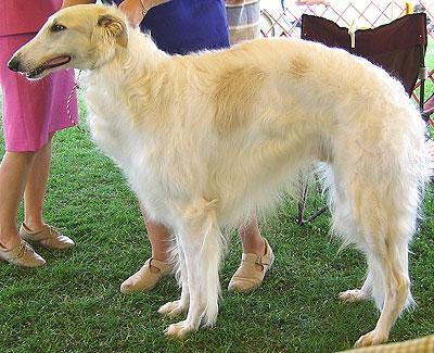 Borzoi: Pets Animals, Borzoi Pets, Dogs, Pretty Girl, Fave Animals, Borzoi Animals, Dog Breeds