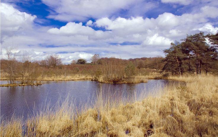 Ontdek de schitterende flora en fauna rondom de vele vennetjes in Nationaal Park de Meinweg.