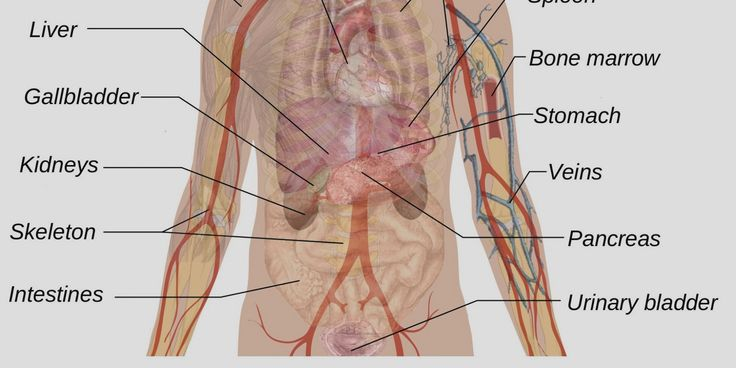 Human Body Diagram Appendix Human Body Anatomy Human Body Body
