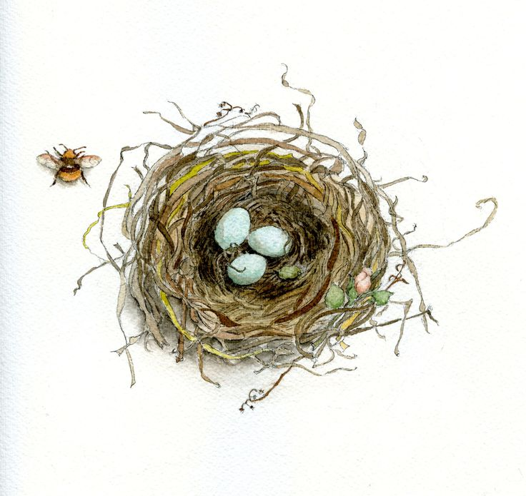 Follow along to learn how to draw a bird's nest