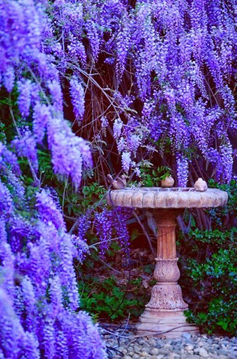 Secret Garden: 17 Best Images About Whimsical Wisteria LOVE!!! On