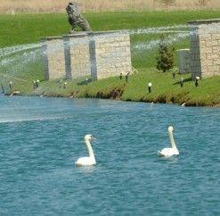 #swans #fountain #anthonyslakeside