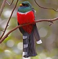 Yecora Alamos Birding Trip  Solipaso and El Pedregal Nature Lodge offer special birding tour in Sonora, Mexico