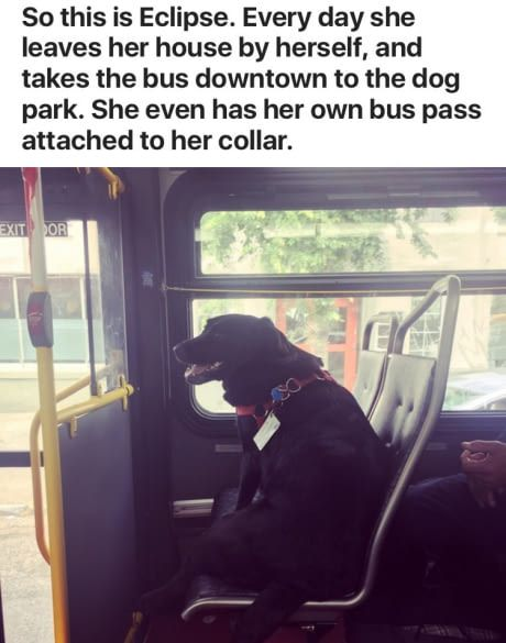 This dog has a better social life than I ever will
