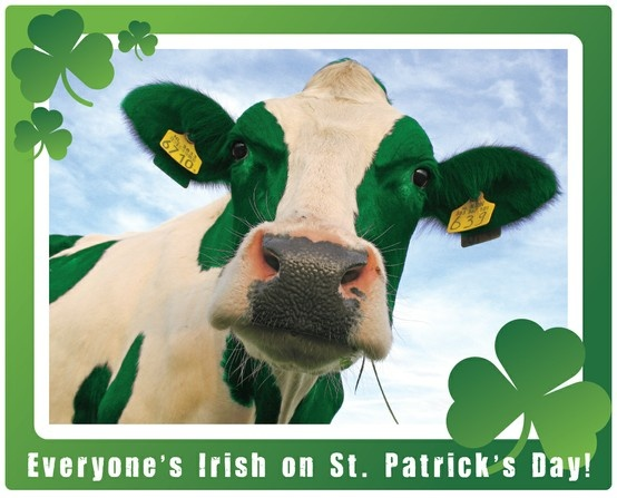 Image result for clipart for st patrick days with cattle
