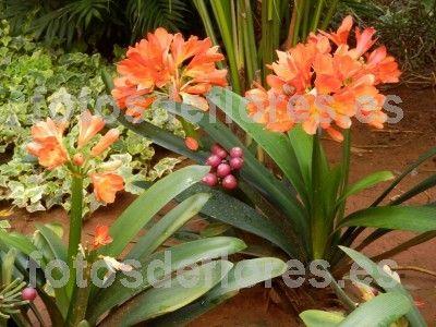 imagen de plantas ornamentales