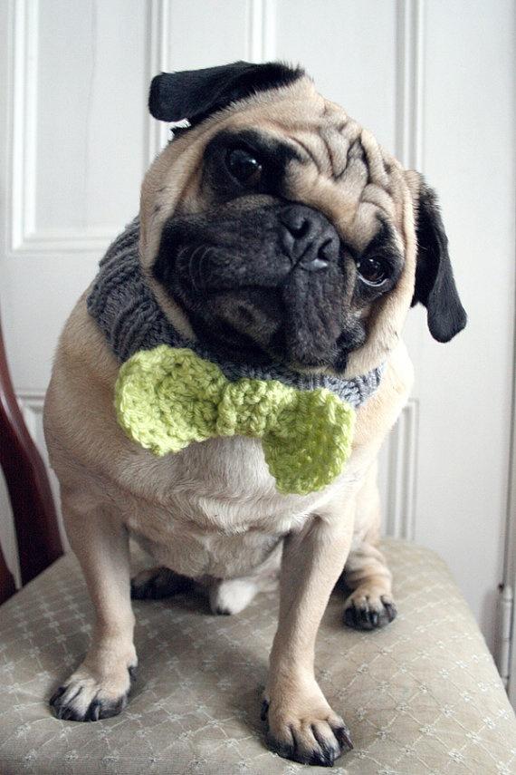 14 best Crochet Pets images on Pinterest   Hunde, Hund katze und ...