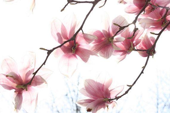 Фотографии природы Мечтательный Цветок Весна-Лето Домашний Декор стен Искусства Первоначально Изобразительного Искусства Розовый Минималистский Характер Photogranhy ohtteam teamt
