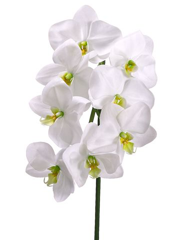 "29.5"" Phalaenopsis Orchid Spray in Cream Green 4"" flower, 8 flowers $9: Sprays, Cream Green, Orchid Spray, Orchids, Artificial Phalaenopsis"