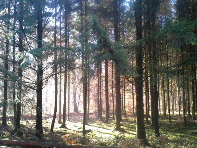 De mystiek van het bos, de stilte van de kleurenpracht, je ruikt het bos in de kleuren. Ook je houtenvloer moet lekker naar hout geuren. #oxidatieveolie