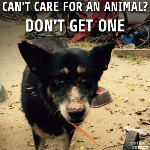 Pinterest Animal Quotes: 25+ Best Animal Rescue Quotes On Pinterest