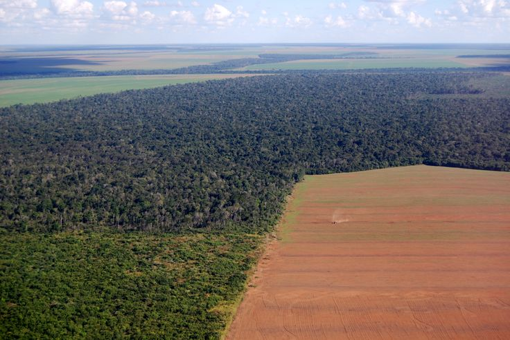 Deforestation in Brazil: Aerial view of a large soy field eating into the tropical rainforest.