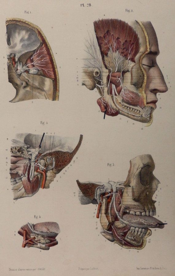 44 best Nicolas Henri Jacob images on Pinterest | Human anatomy ...