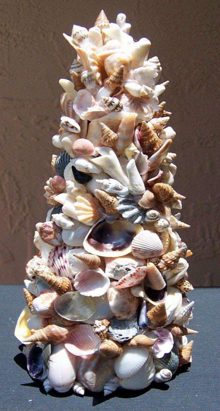 Pin By Sundial Beach Resort Spa On Shells Seashell Crafts