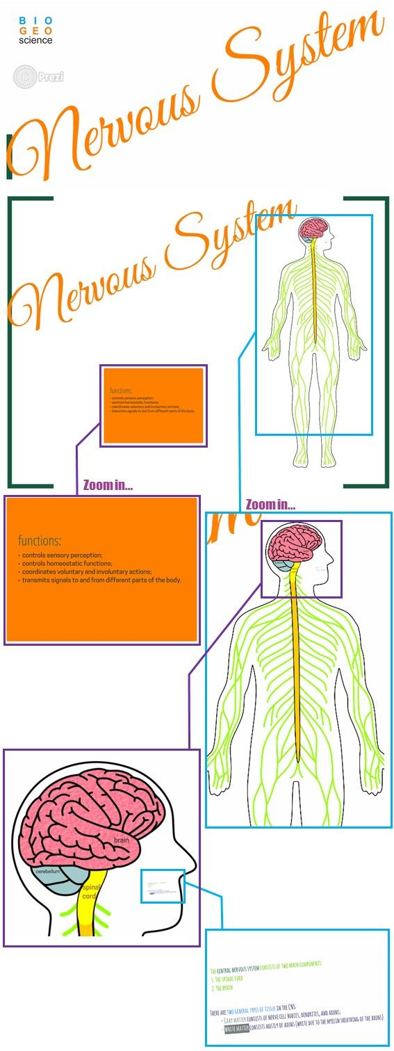 Use this TpT product to teach the Nervous System: Central Nervous System and PNS, Neuron, Synapse, Reflex Arc, Neurotransmitters. This leaves ppt presentations miles away! The teacher decides what can be explored and how exhaustive the explanations can be. NGSS: LS1.A; MS-LS1-3; HS-LS1-2. Extract the files and run a file called Prezi.exe!