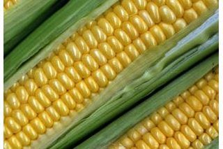 How to Grill Corn on the Cob on the Big Green Egg   eHow