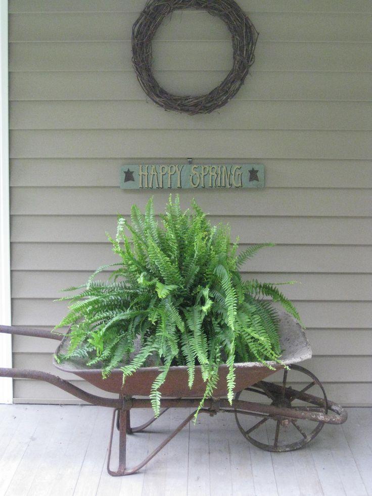 Boston Fern in old metal wheelbarrow on front porch.