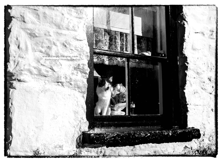 cat at cottage window