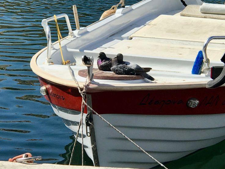 Pigeons in love ❤️? Lake Voulismeni in Agios Nikolaos