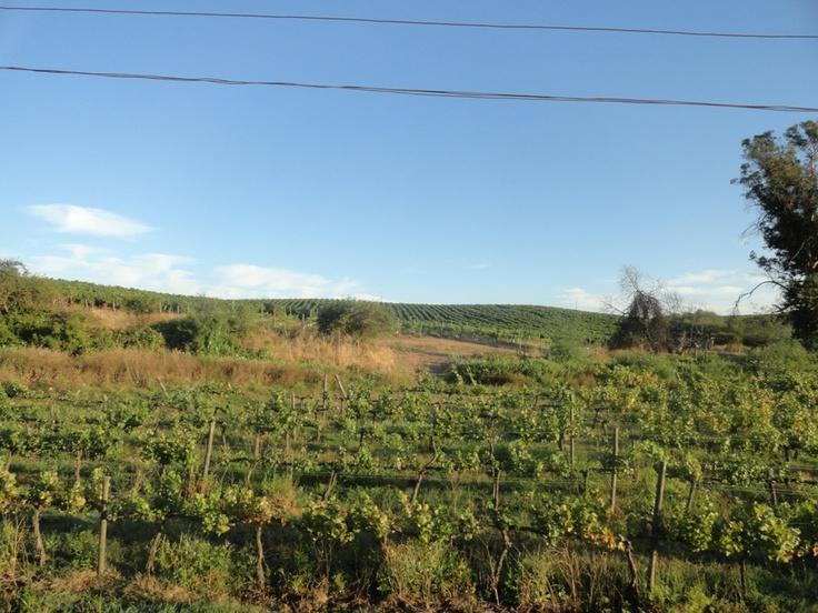 Viñas, manzanas, cerezas, tomates, zapallos, maíz... a orillas de los rieles.
