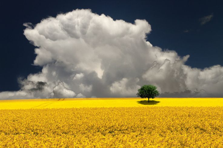 Rapeseed Field Storm by Carlos Gotay on 500px