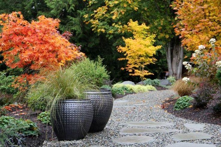 érable du Japon Orange Dream et graminées dans le jardin contemporain