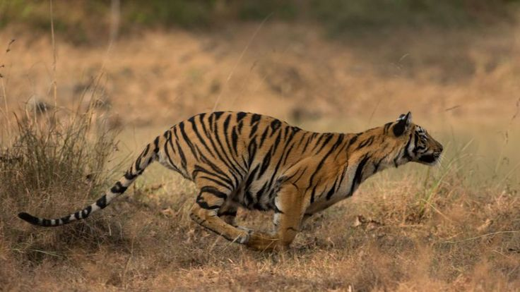 Reading: These young village women are fighting to save India's endangered #tigers