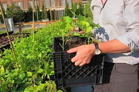 13 best rooftop garden images on pinterest for 14 m4s garden terrace