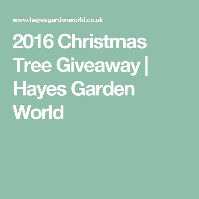 2016 Christmas Tree Giveaway | Hayes Garden World