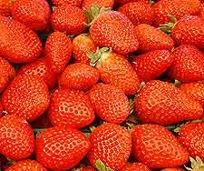 Winemaking Recipe for Strawberry Wine, How To Make Strawberry Wine: Wine Making Guides