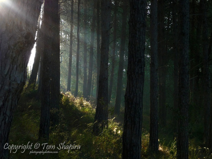 Sunrise In The Forest  Photographer: Tom Shapira