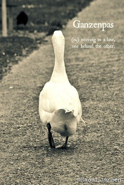 Fine Art Photography Goose words soft door theimperfectartistNL