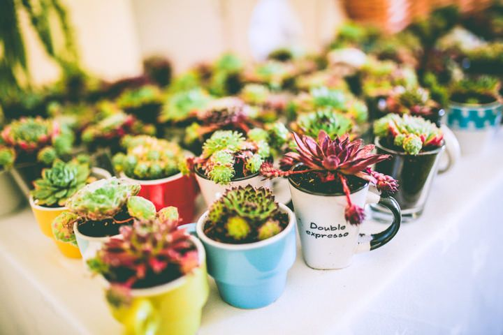 Succulent Favors in Thrift Stor Coffee Mugs // Neverland Photography // BoHo Weddings