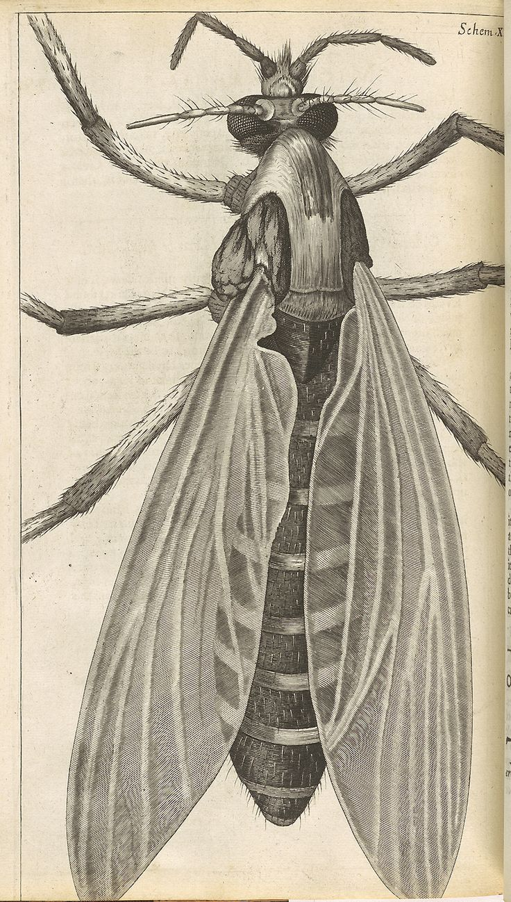 Hooke's Books: Books by Robert Hooke