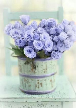 Pale purple roses by Andrea A. Elisabeth                                                                                                                                                                                 Mais
