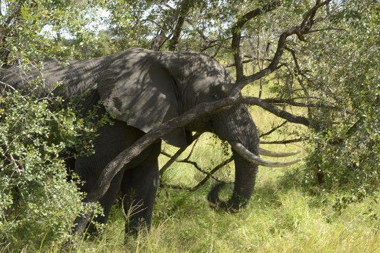 Go!Panzi Africa Volunteer Adventures- take a look at www.africavolunteeradventures.com for more