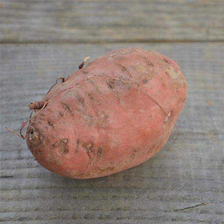 Les 25 meilleures id es de la cat gorie culture patate douce sur pinterest cultiver patate - Technique culture patate douce ...
