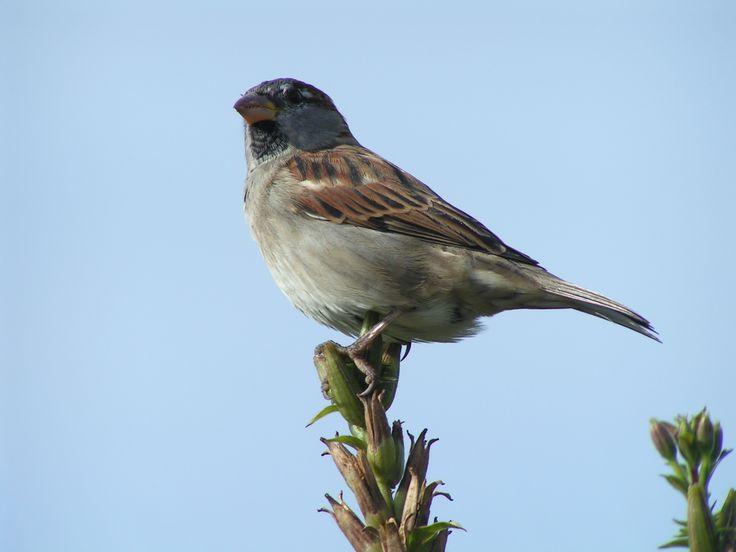 #bird #natuur