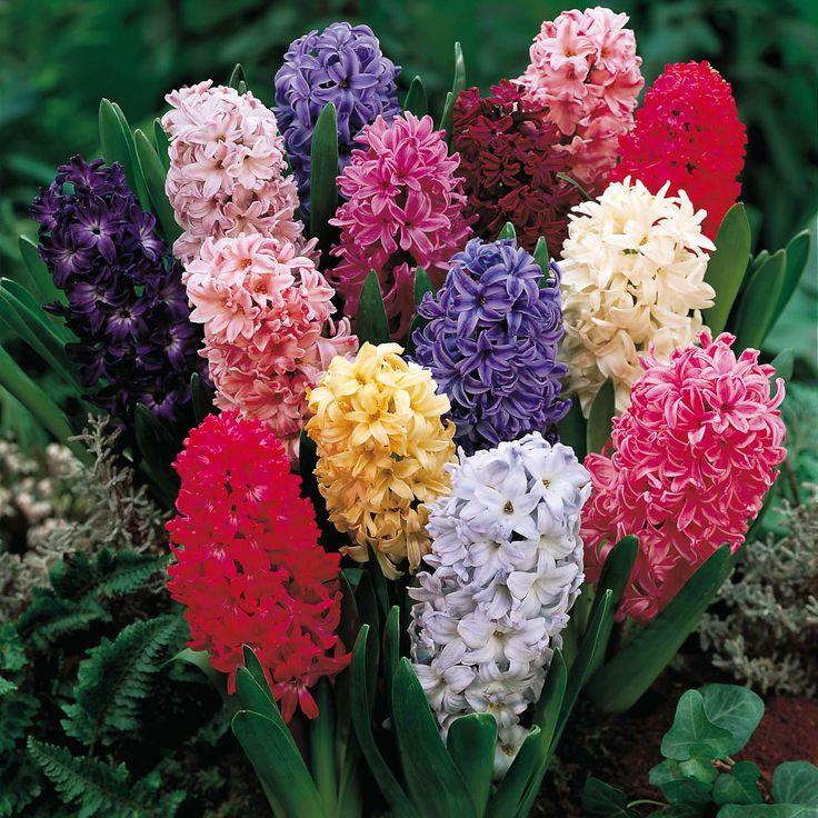 Flowers Flower Crystal Precious Green Delicate Spring Vase Purple