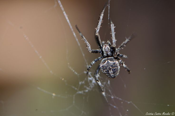 Spider house.. by Cristian Castro Morales on 500px