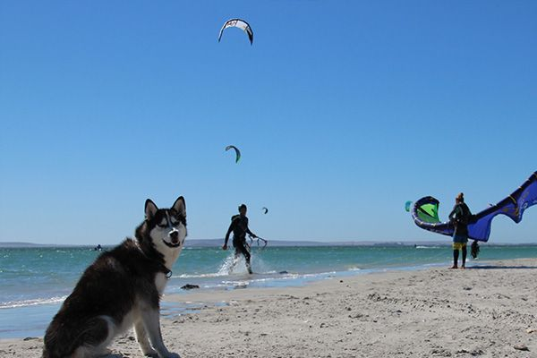 Kite Quarters in Langebaan. They specialise in tailor making bespoke kitesurfing holidays. #kitesurfing #dogfriendlybeaches