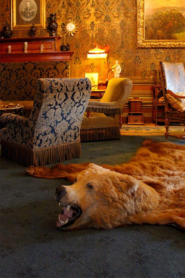 Best 25 Bear Skin Rug Ideas On Pinterest Bear Rug Log