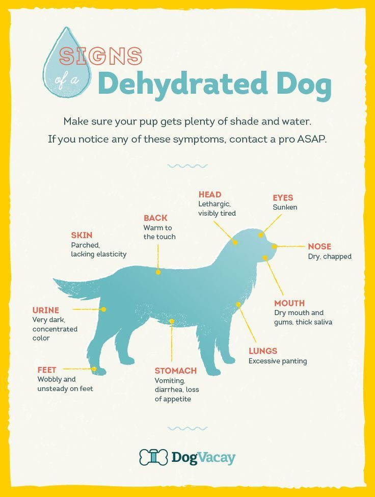 It's getting hot with #summer almost here, watch out for these Signs of a Dehydrated Dog