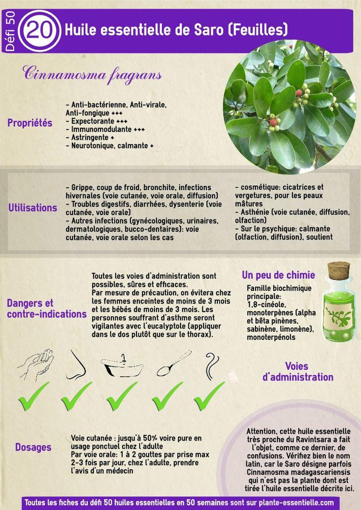 Huile essentielle de Saro : propriétés et utilisation sans danger (Cinnamosma fragans)